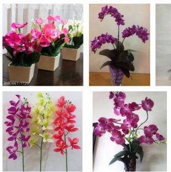 Harga Bunga Anggrek Plastik