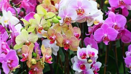 harga bunga anggrek termahal