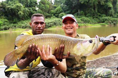 Ikan Arwana di Sungai Indonesia