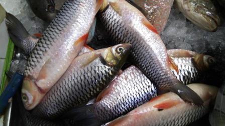 harga ikan jelawat sungai