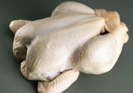 harga ayam broiler