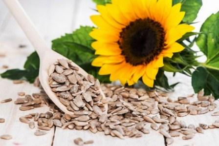 harga biji bunga matahari per kilo