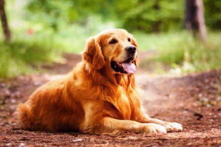 Harga Anjing