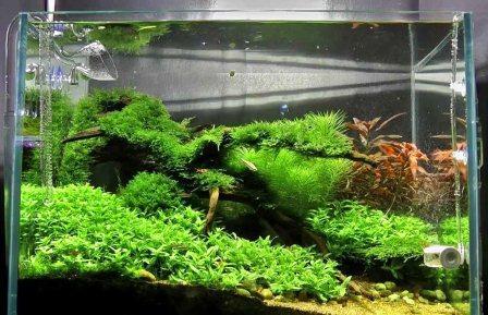 Harga Mesin Aquarium