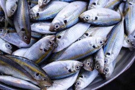Harga Ikan Kembung