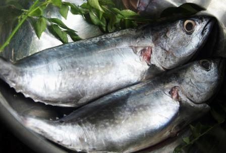Harga Ikan Tongkol