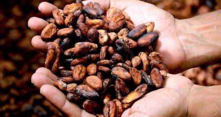Harga Kakao Kering Tingkat Petani