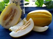 Harga Korean Melon