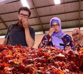 Harga Pala di Indonesia