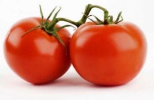Harga Tomat Globe