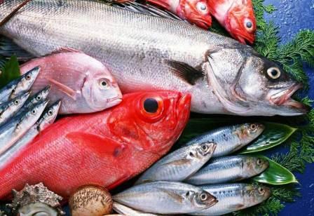 Daftar Jenis & Harga Ikan