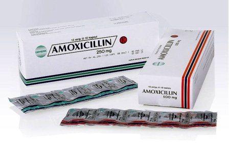 Harga Amoxicillin