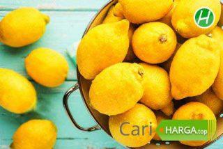 Harga Buah Lemon