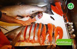 Harga Ikan Salmon