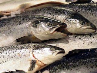 Harga ikan salmon di giant