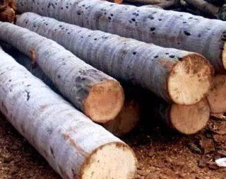 Harga kayu kelapa gelondongan
