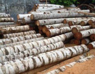 Harga kayu kelapa per batang