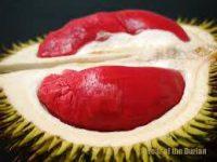 Buah Durian Banyuwangi