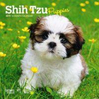 Harga Anjing shih tzu mini atau puppy