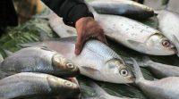 Harga Ikan Bandeng
