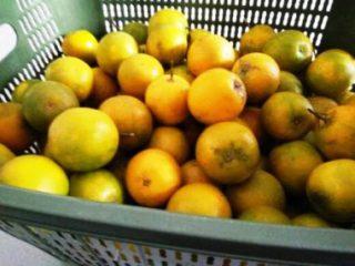 Harga jeruk Baby