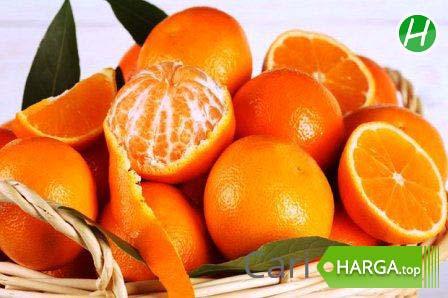 Harga jeruk