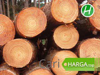 Harga Kayu Pinus