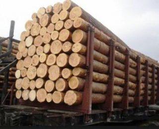 Harga Kayu Pinus Per Kubik