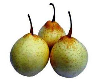Harga Pear Korea