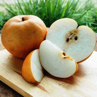Harga Pear Singo