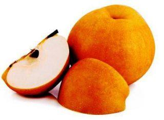 Harga Pear Singo Korea