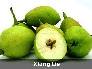 Harga Pear Xiang Lie
