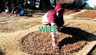 Prediksi Harga Cengkeh Sulawesi Tenggara